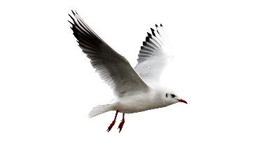 Aves - guía de plagas
