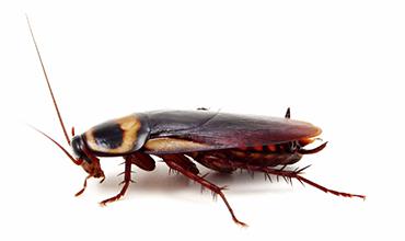 Insectos - Guía de Plagas