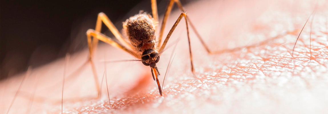 4 enfermedades que transmiten los mosquitos