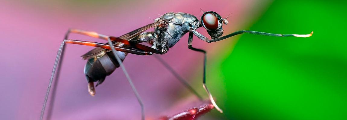 ¿Qué son los equipos insectocaptores e insectocutores?