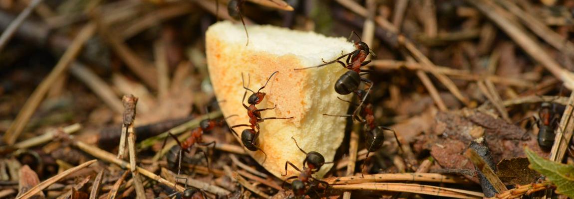 ¿Cómo evitar hormigas en casa?